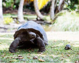Adult n Baby Tortoise