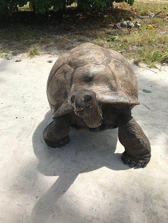 turtle-george