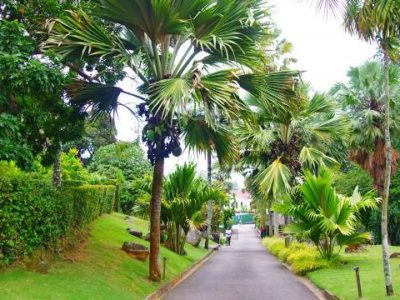 Seychelles-National-Botanical-Gardens