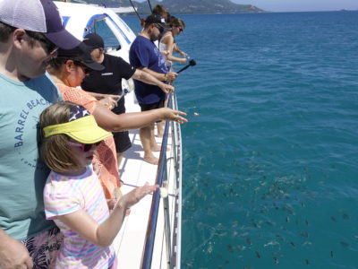 Full Day Reef Safari - Fish Feeding