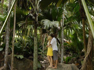 Praslin Island-Romance-Vallee-De-Mai-2