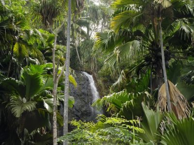 Waterfall-Vallee-de-Mai-1
