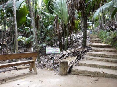 Vallee de Mai Pathway