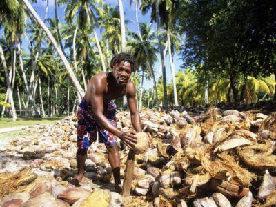 Coconut de-husking