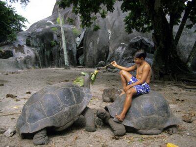 La Digue Giant Tortoise